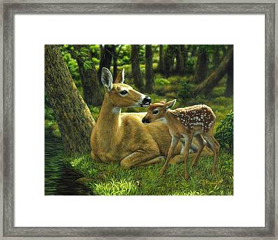 Whitetail Deer - First Spring Framed Print by Crista Forest
