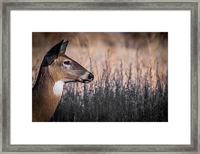 Whitetail Doe Keeping Watch 2 Framed Print by Ernie Echols