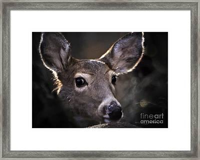 Whitetail Doe Framed Print by Nava Thompson