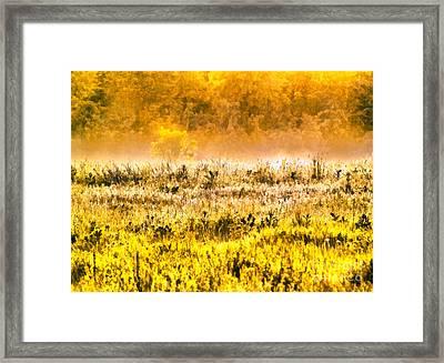 Whitetail Roe Deer Doe Standing In Buckwheat Framed Print by Odon Czintos