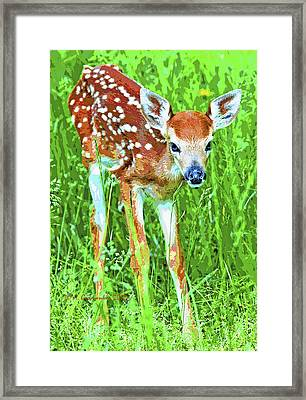 Framed Print featuring the photograph Whitetailed Deer Fawn Digital Image by A Gurmankin