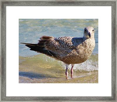 Who Are You Looking At Framed Print by Bruce Bley