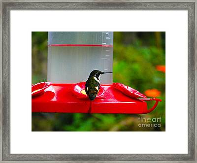Who Is Behind Me Framed Print by Al Bourassa