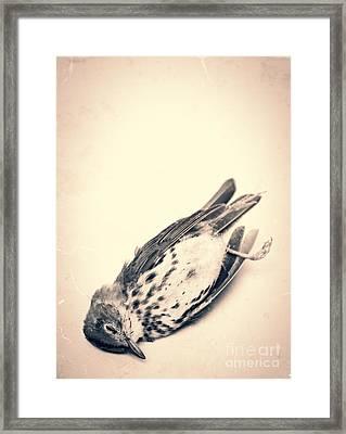 Who Killed Cock Robin Framed Print by Edward Fielding
