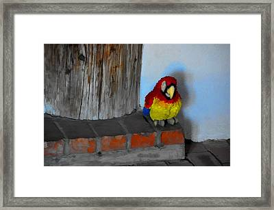 Who Needs A Doorbell Framed Print by Jan Amiss Photography