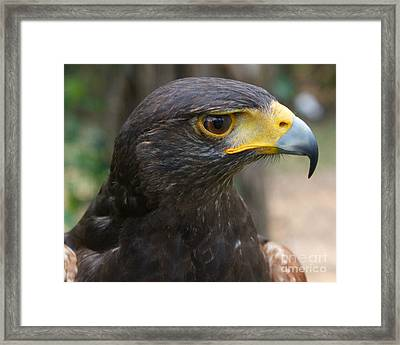 Who There Framed Print by D C