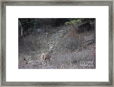 Who You Lookin At  Buck Framed Print by Linda Meyer