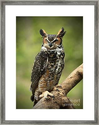 Whoos Watching Me Great Horned Owl In The Forest  Framed Print by Inspired Nature Photography Fine Art Photography
