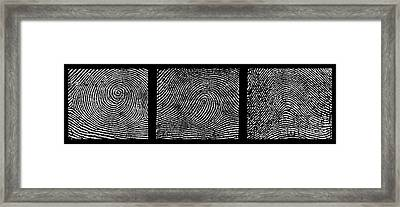 Whorl, Loop, And Arch Fingerprints Framed Print by Science Source