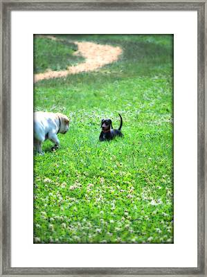 Whos This Framed Print by Kathy Sampson