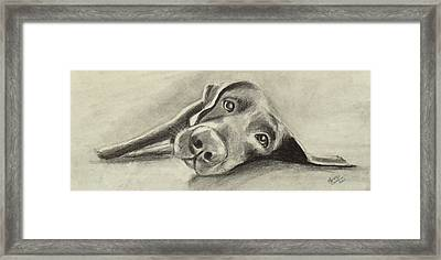 Why Are You Waking Me Up? Framed Print by Marcello Cicchini