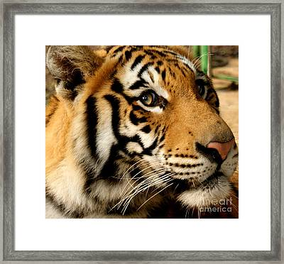Why Framed Print by D C