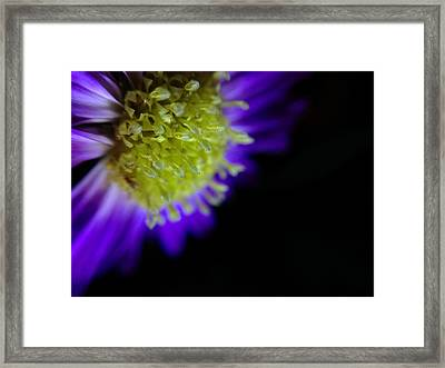 Wicked Lovely Framed Print by Susan Maxwell Schmidt
