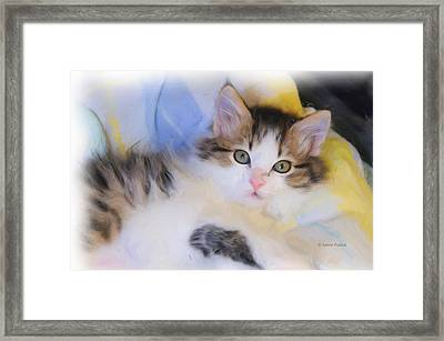 Wide Eyed Kitten Framed Print by Kenny Francis