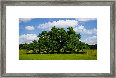 Wide Oak Framed Print by Jerry Hart