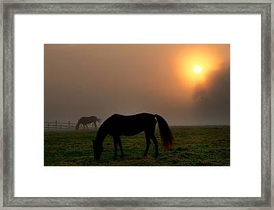 Widener Horse Farm At Sunrise Framed Print by Bill Cannon