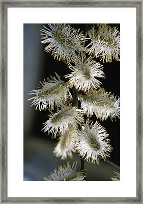 Wiilow Flower Framed Print by Retro Images Archive