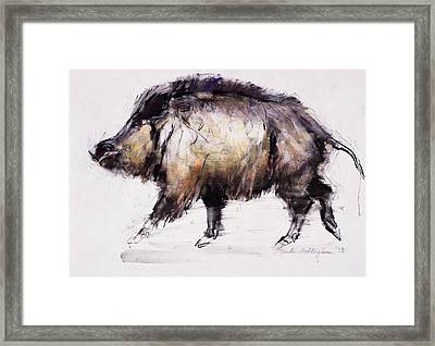 Wild Boar Framed Print by Mark Adlington