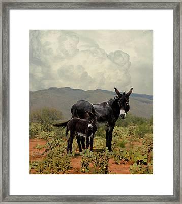 Wild Burros Of Tucson Framed Print by Schwartz