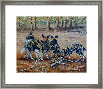Wild Dogs After The Chase Framed Print by Caroline Street