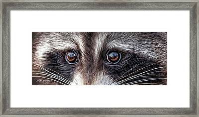 Wild Eyes - Raccoon Framed Print by Carol Cavalaris