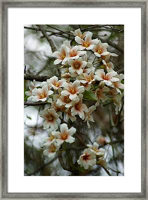 Wild Flowering Beauty Framed Print by Kim Pate
