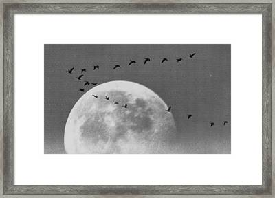 Wild Geese Framed Print by Retro Images Archive