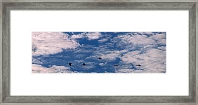 Wild Goose Heaven Framed Print by Skip Willits