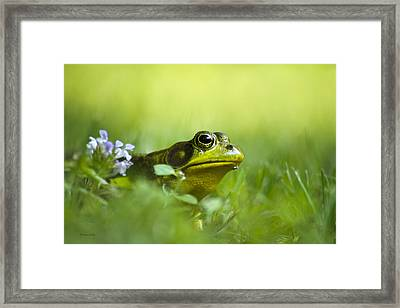 Wild Green Frog Framed Print by Christina Rollo