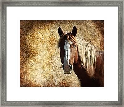 Wild Horse Fade Framed Print by Steve McKinzie