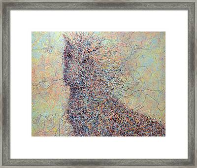 Wild Horse Framed Print by James W Johnson