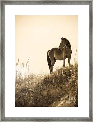 Wild Horse On The Beach Framed Print by Diane Diederich