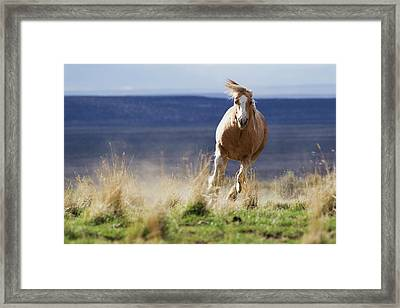 Wild Horse Running Framed Print by Ken Archer