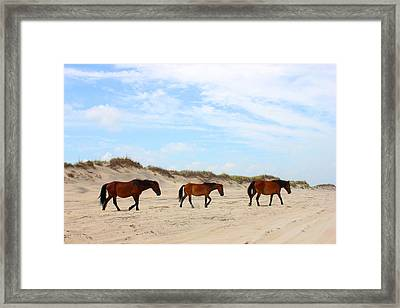 Wild Horses Of Corolla - Outer Banks Obx Framed Print by Design Turnpike