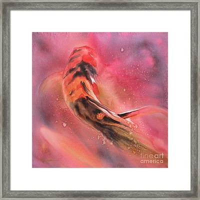 Wild Koi Framed Print by Robert Hooper