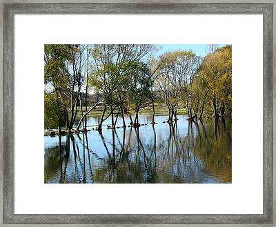 Wild Life In The Marshlands. Framed Print by Joyce Woodhouse