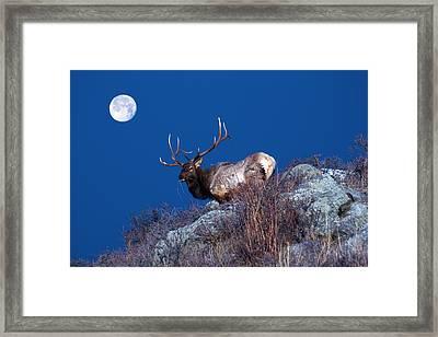 Wild Moon Framed Print by Shane Bechler