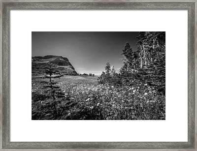 Wild Mountain Flowers Glacier National Park Framed Print by Rich Franco