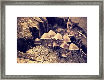 Wild Mushrooms Framed Print by Amanda Elwell
