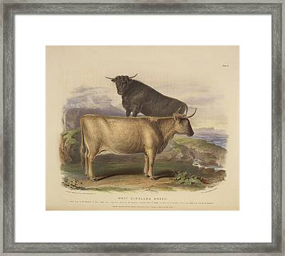 Wild Or White Forest Breed Framed Print by British Library