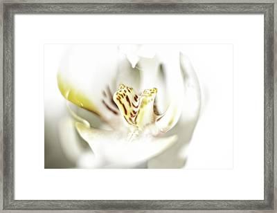 Wild Orchid Framed Print by Erik Brede