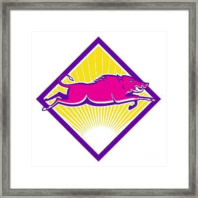 Wild Pig Razorback Jumping Side Framed Print by Aloysius Patrimonio
