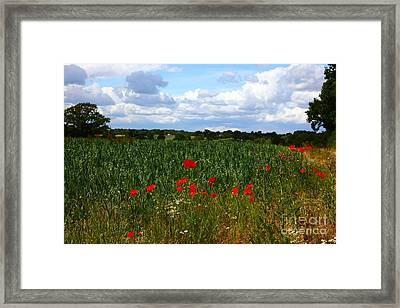 Wild Poppies And Corn Field Framed Print by James Brunker