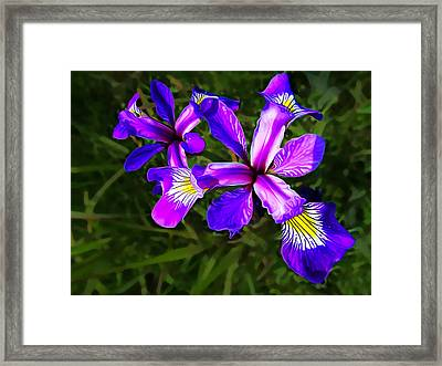 Wild Purple Iris Framed Print by Bill Caldwell -        ABeautifulSky Photography