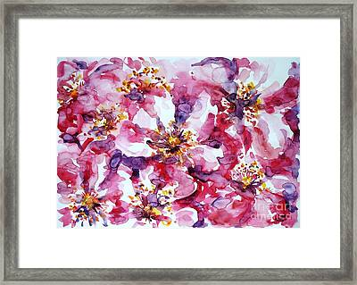 Wild Rose Framed Print by Zaira Dzhaubaeva