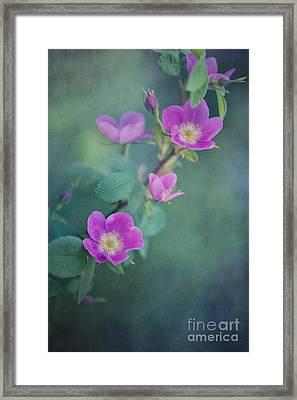Wild Roses Framed Print by Priska Wettstein
