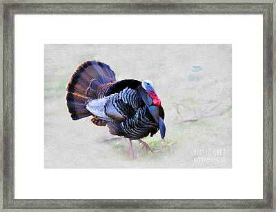 Wild Turkey Artistic Framed Print by Dan Friend