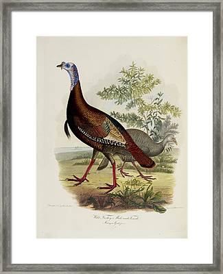 Wild Turkey Framed Print by British Library