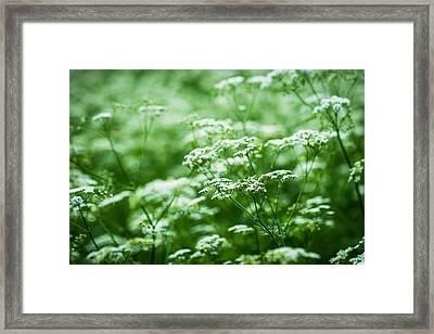 Wild Vegetation Framed Print by Alexander Senin