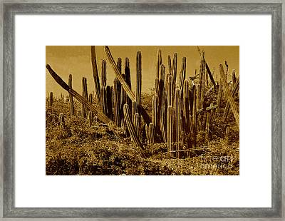 Wild West Ivb Framed Print by Anita Lewis